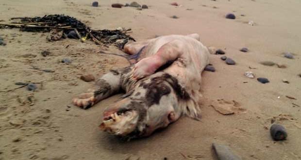 Creatura misterioasa, descoperita pe o plaja